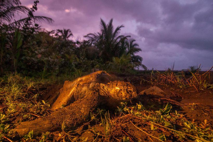 1-neo-tortuguero-costa-rica-01231