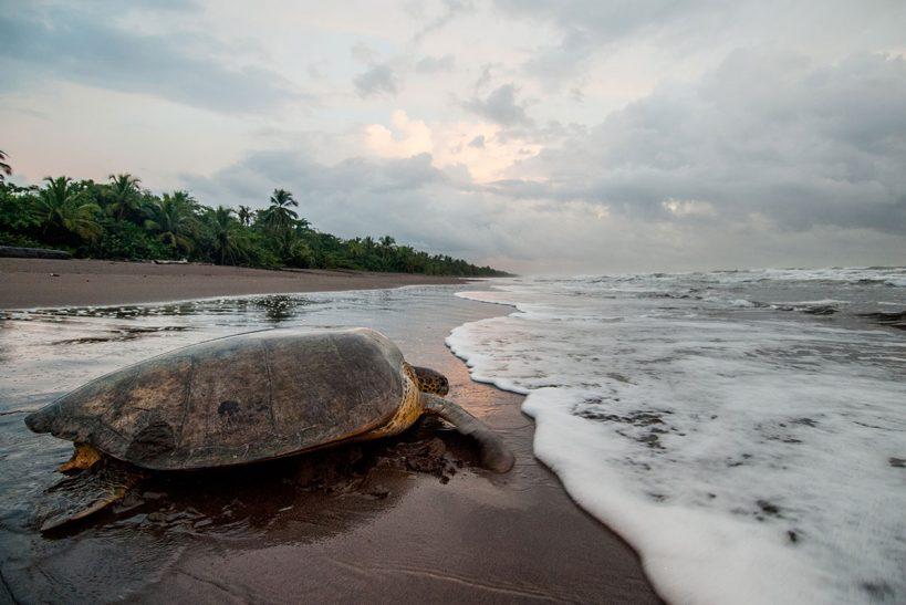 5-neo-tortuguero-costa-rica-00846