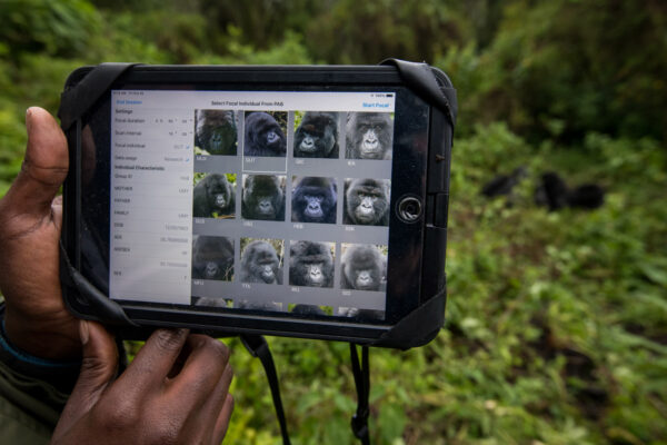 neo-africa-gorillas-9048-web