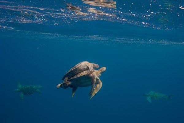 neo-turtle11