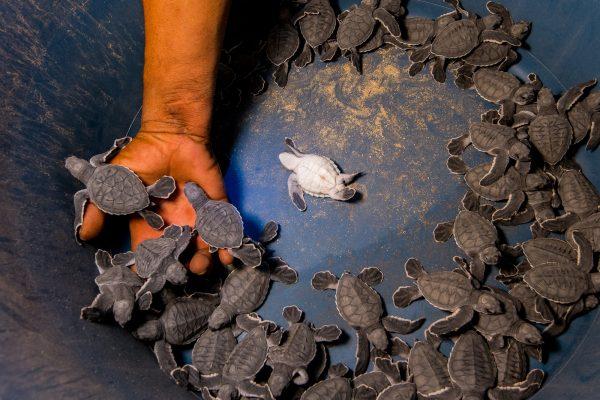 neo-turtle12