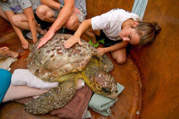 neo-turtle17