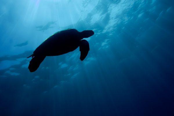 neo-turtle19