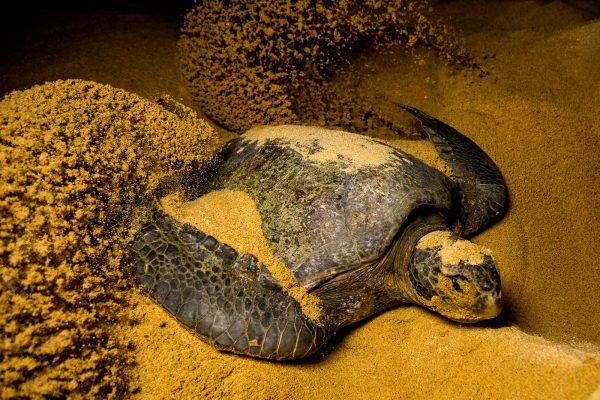 neo-turtle2