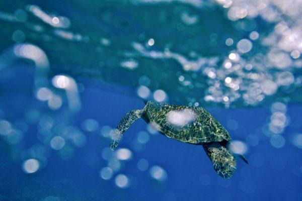 neo-turtle21