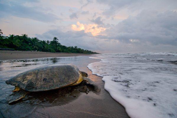 neo-turtle4