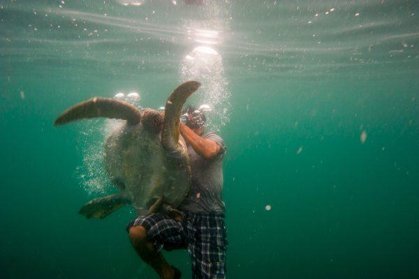 neo-turtle9