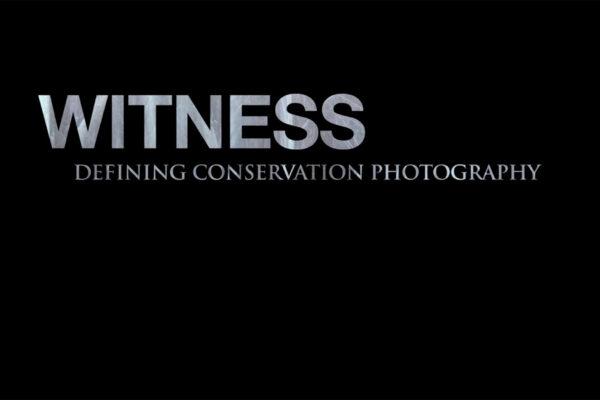 witness-1-web