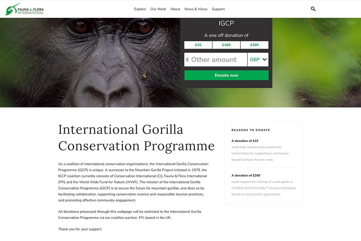 gorillas-in-the-mist-web-3